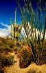 Tucson Mountain P...