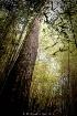Last Tree Standin...