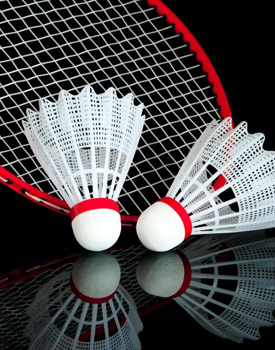 Racquet for the Birds
