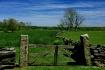 Pristine Landscap...