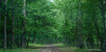 Tara Wildlife Woods