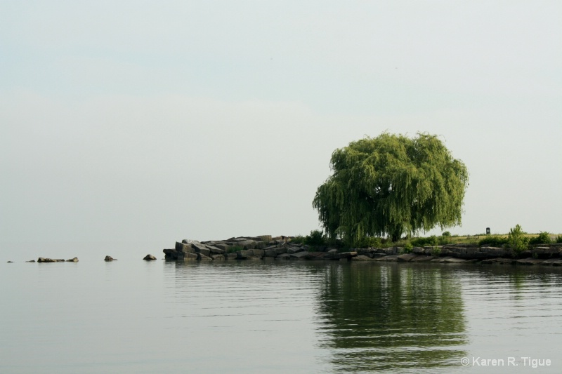 Lake Erie Tree