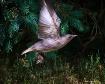 Starling Takeoff
