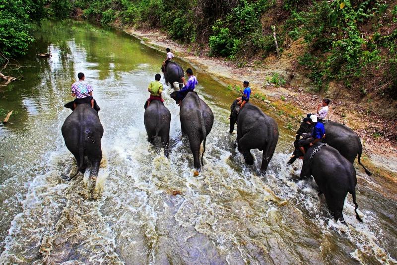 Elephants Camp