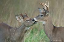 Valley Forge Wildlife 7