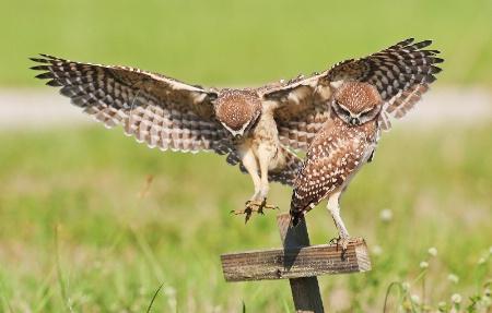 Close Landing