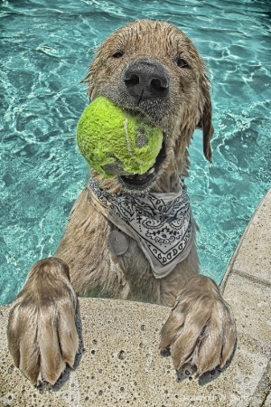 you want ball?