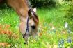 Horse & wild flow...