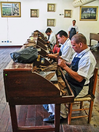 Dominican Cigar Makers