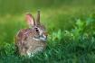 Smiley Bunny
