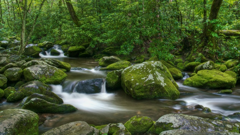 Roaring Fork After the Rain