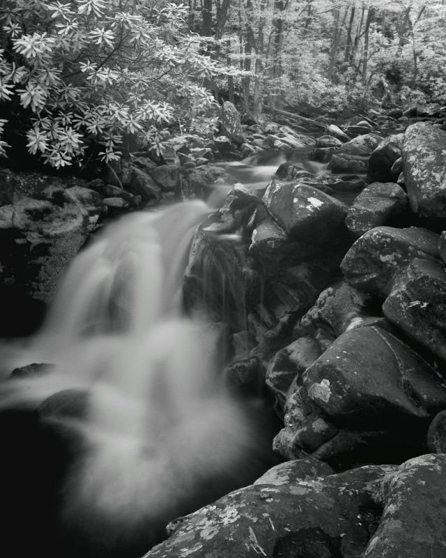 Smoky Mountain Creek (b/w)