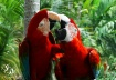 Mouthy Macaws