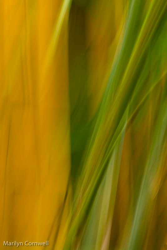 Bamboo Abstract - ID: 13054357 © Marilyn Cornwell