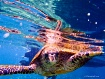 Swimming in Seych...