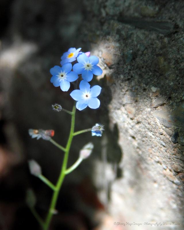 ~Blue on the Rocks~