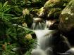 Flowers & Water