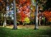 Autumnal Framewor...