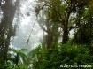 Costa Rica Rain F...