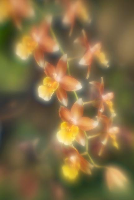 Pleiades - ID: 13088193 © Nora Odendahl