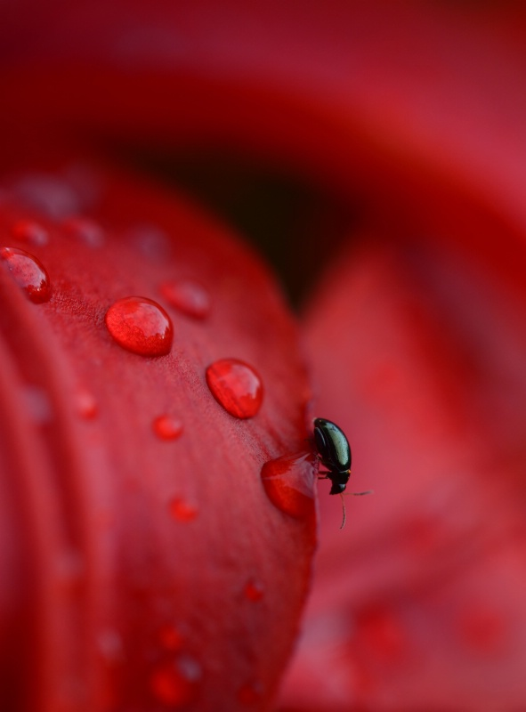 Raindrop surprise