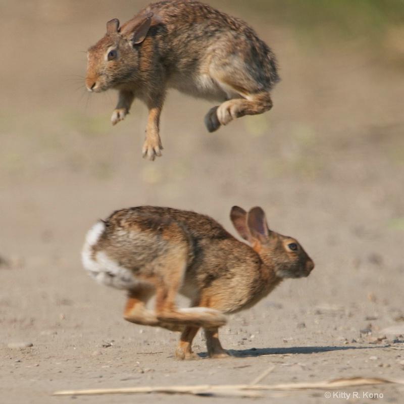 Bunny Hop - ID: 13092177 © Kitty R. Kono
