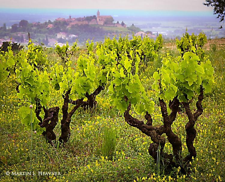 Vines & Views - Near Cairanne, France - ID: 13096713 © Martin L. Heavner