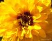 yellow flower - m...