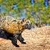 2cross fox alert - ID: 13112649 © Gary W. Potts