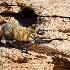 2cross fox caution - ID: 13112650 © Gary W. Potts