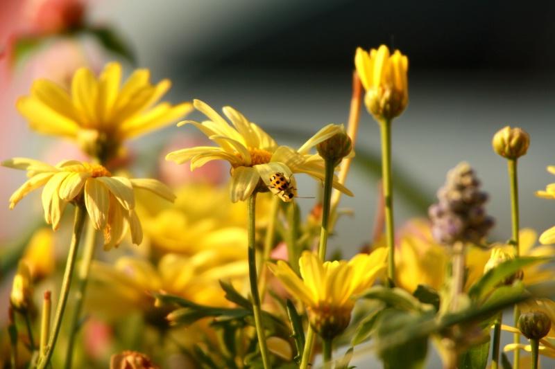 yellow bug kt