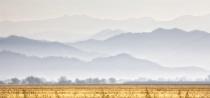 Wheat Field & Foothills