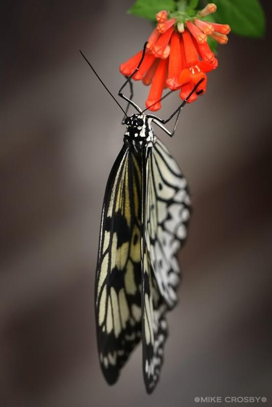 Butterfly on Flower ...