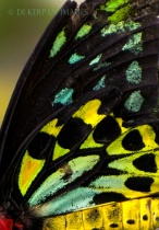 insect color