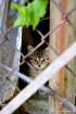 Kitty Shelter
