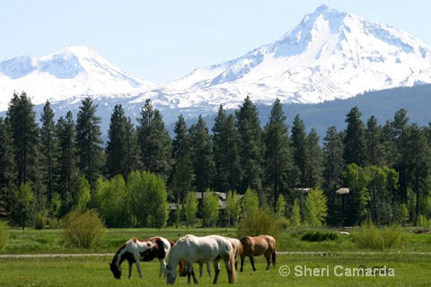 Black Butte Ranch, Oregon - ID: 13159781 © Sheri Camarda