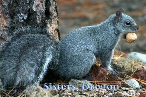 Sisters, Oregon - ID: 13159800 © Sheri Camarda