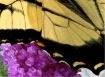 Winged Art
