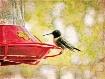 ~ Hummingbird ~