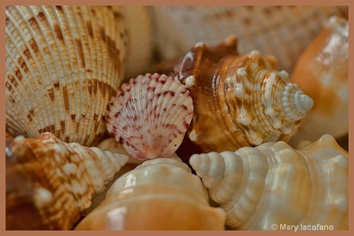 Sea Shells by the Seashore - ID: 13167285 © Mary Iacofano