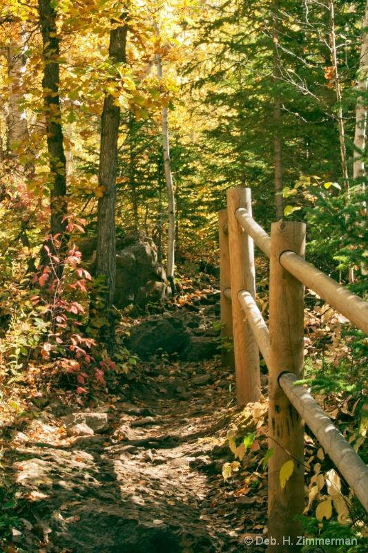 Into the Autumn Woods - ID: 13167397 © Deborah H. Zimmerman