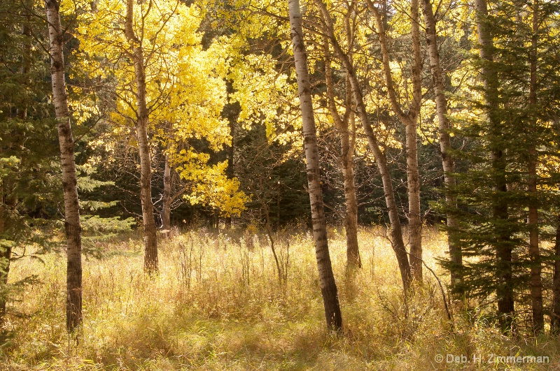 A Soft Autumn Sunshine - ID: 13167476 © Deborah H. Zimmerman