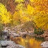 © Deborah H. Zimmerman PhotoID # 13167479: A Golden Turn in Boulder Creek
