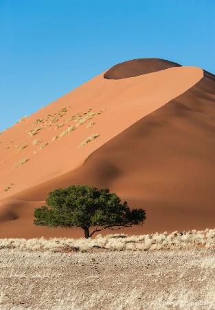 Sand Dune 1209