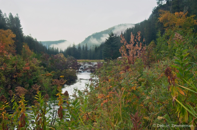 Weeds of Autumn in Spearfish Canyon - ID: 13169598 © Deborah H. Zimmerman