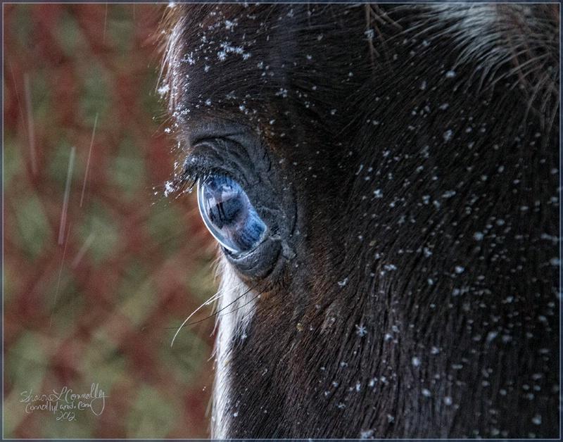 Ice Blue Eye