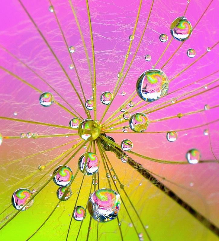 Fairy Nectar Drops