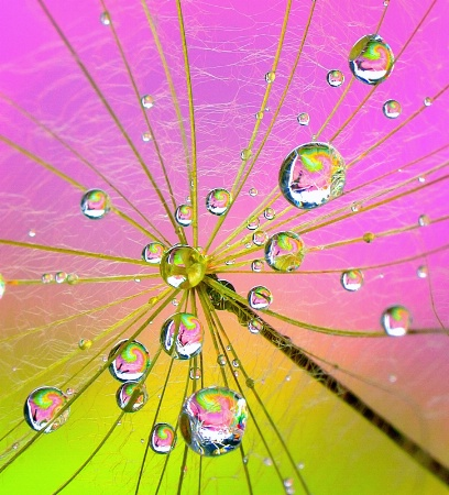 Fairy Nectar Drops