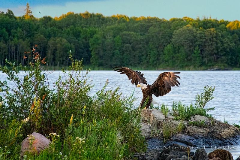 Landing - ID: 13174343 © Michelle T. Hekle