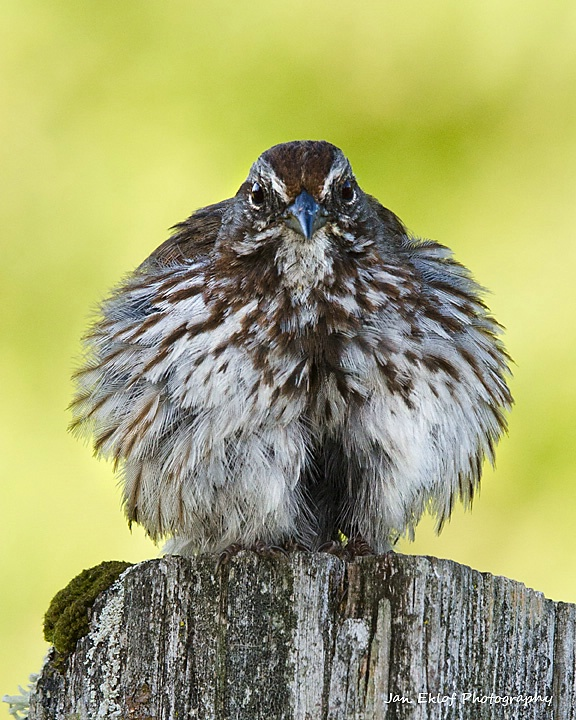 All Puffed up!